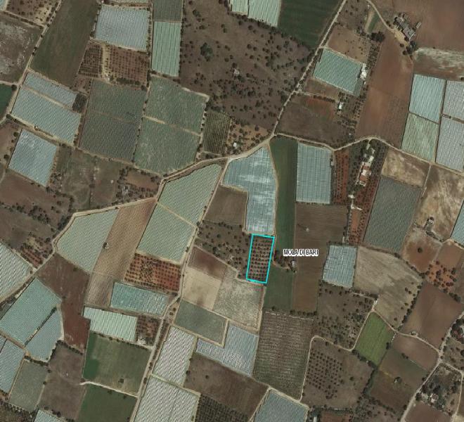 localizzazione terreno Masciole